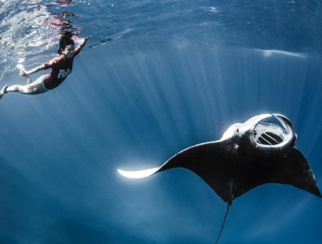 SWIM WITH THE MAJESTIC MANTA RAYS