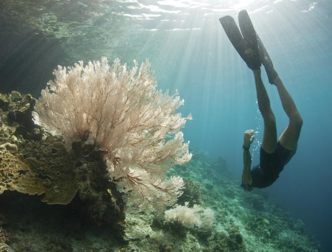 The crystal clear waters around Lembongan are perfect for snorkelling over the colourful coral  teeming with tropical fish